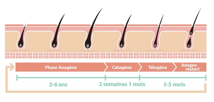 Tout savoir sur le cheveux - Marais Esthétique Paris